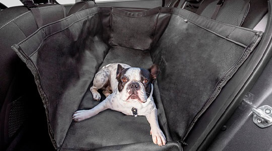 Rear seat pet cover.