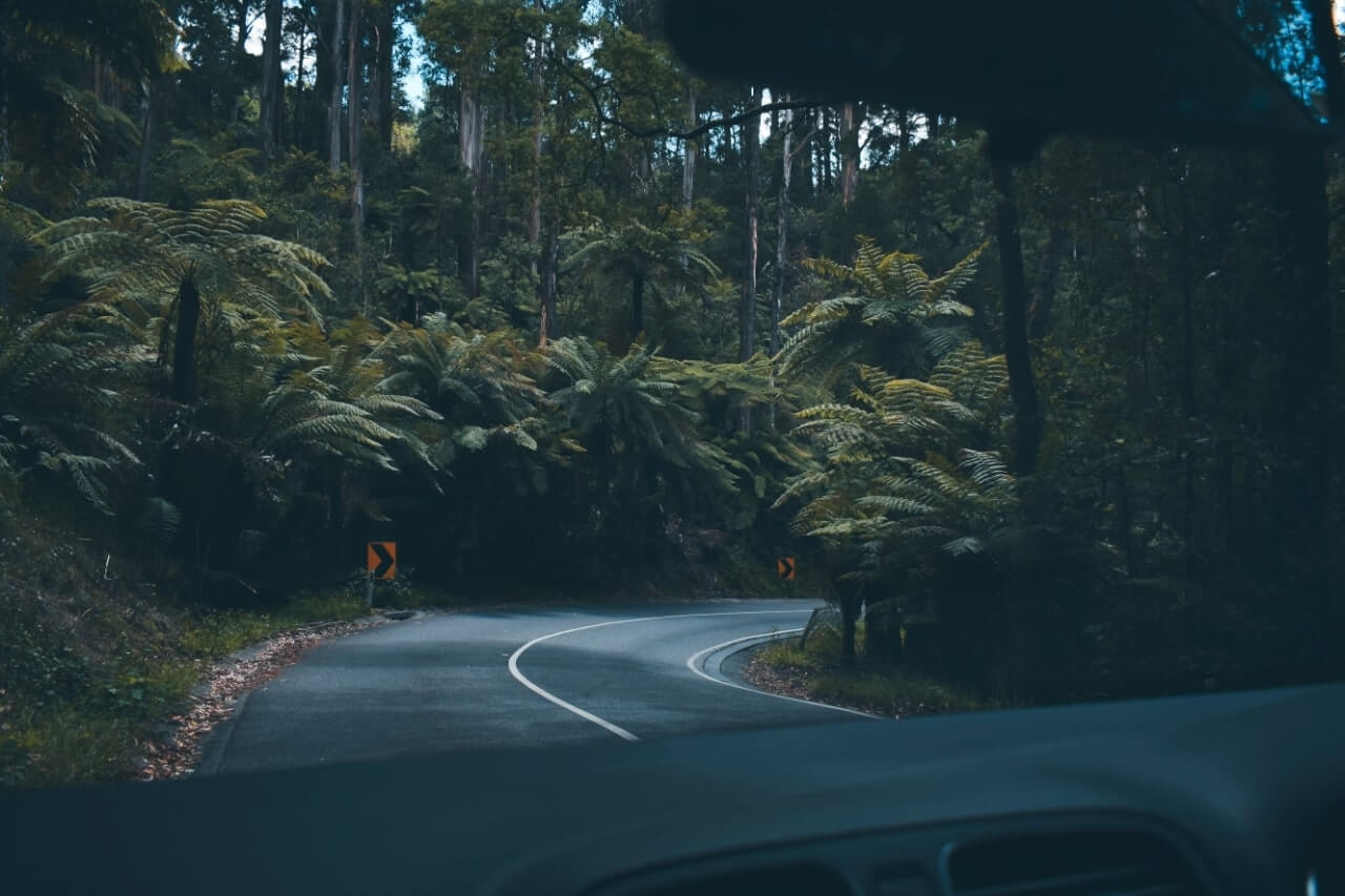 road trip through a winding forest road