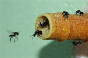 Bees flying around a honey tube