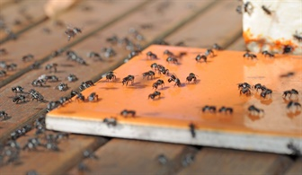 Bees swarming over a honey square